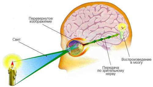 Восприятие картинки мозгом