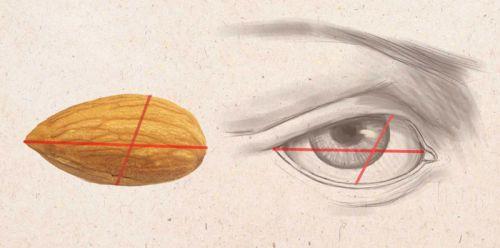 Глаз по форме миндального ореха