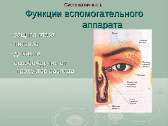 Функции вспомогательного аппарата глаза