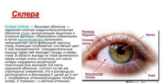 Информация о склере