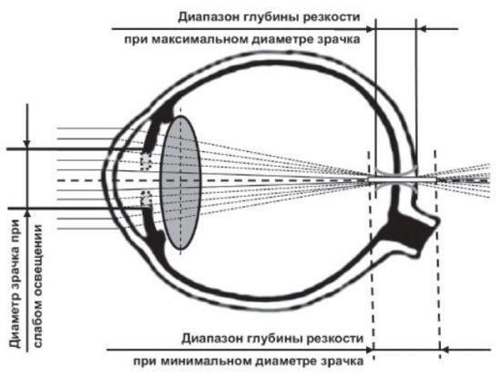 Зрачок глаза