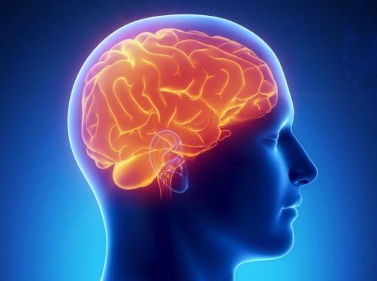 Головной моз